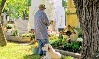 Cani al cimitero a Settimo? Bocciata la proposta di Delvecchio