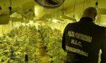 Scoperta piantagione di marijuana in un capannone a Cesano FOTO