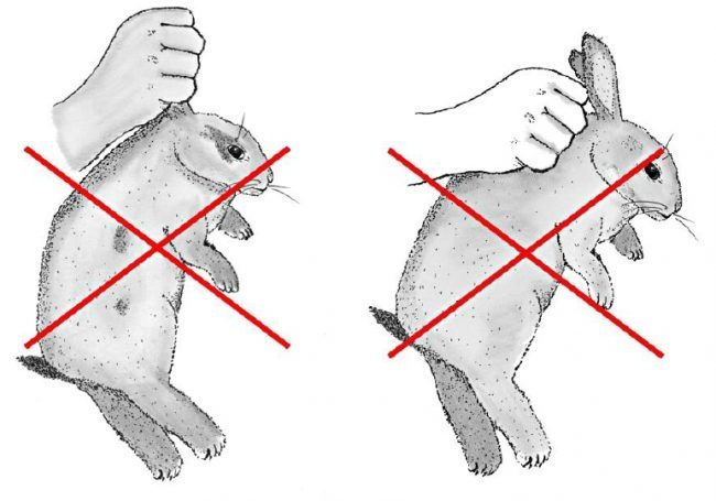 Conigli presi per le orecchie e calci ai cani: Enpa insorge