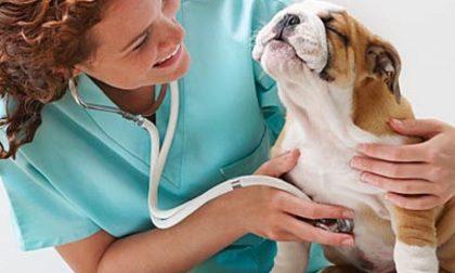 Salute a quattro zampe: corso con il veterinario a Gudo Visconti