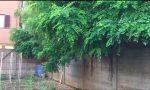 Benvenuti nella giungla di Cornaredo VIDEO