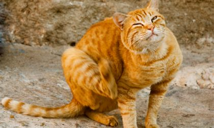 Pulci e zecche su cani e gatti, un pericolo da combattere