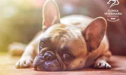 Come proteggere i nostri cani dal caldo estivo?