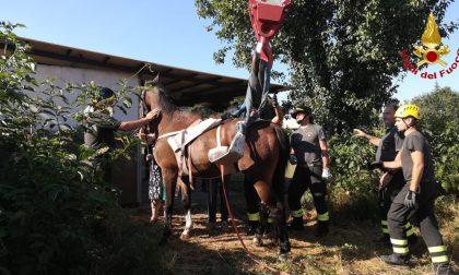 Cavallo intrappolato, salvato dai pompieri