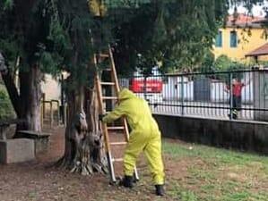 Nido di calabroni, pompieri al parco della villa Comunale