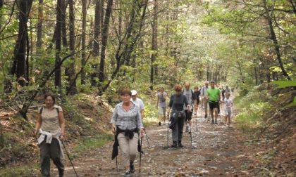 Quattar Pass in Pineta, si torna a correre nel bosco