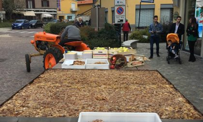 Una piota da record in piazza a Inveruno