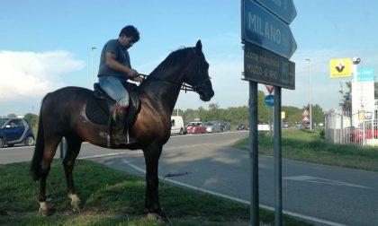 A Rho il cavallo che legge i cartelli stradali