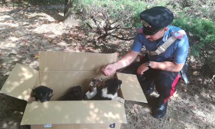 Sette cuccioli abbandonati: li salvano i carabinieri