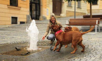 In Lombardia arrivano i cimiteri per gli animali