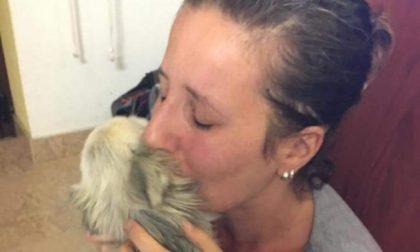 Il chihuahua Cherry torna a casa dopo quasi due anni