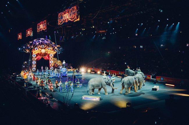 Circo a Saronno: gli animalisti interrogano il sindaco