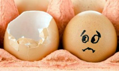 Rischio salmonella: ritirato lotto di uova fresche prodotte in Umbria