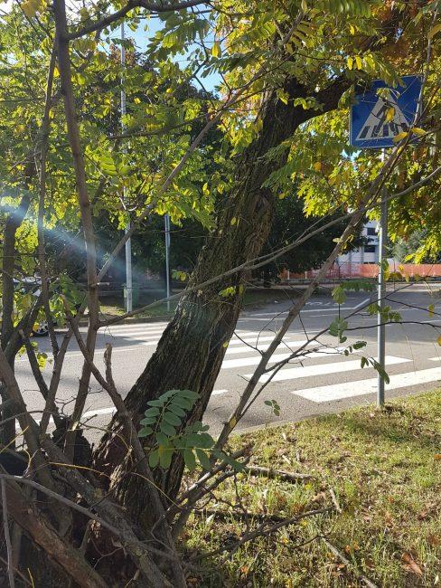 Castano Primo, albero pericolante al Torno
