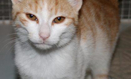 Gattino abbandonato sull'A8 cerca casa FOTO