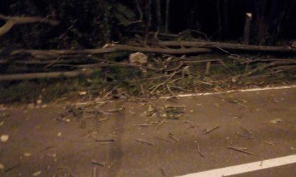 Forti raffiche di vento, albero caduto a Villastanza