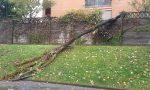 Crolla un albero a San Vittore: paura tra i condomini FOTO
