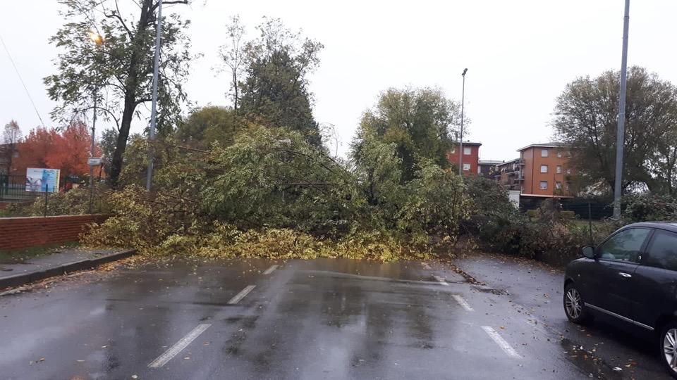 albero caduto solaro