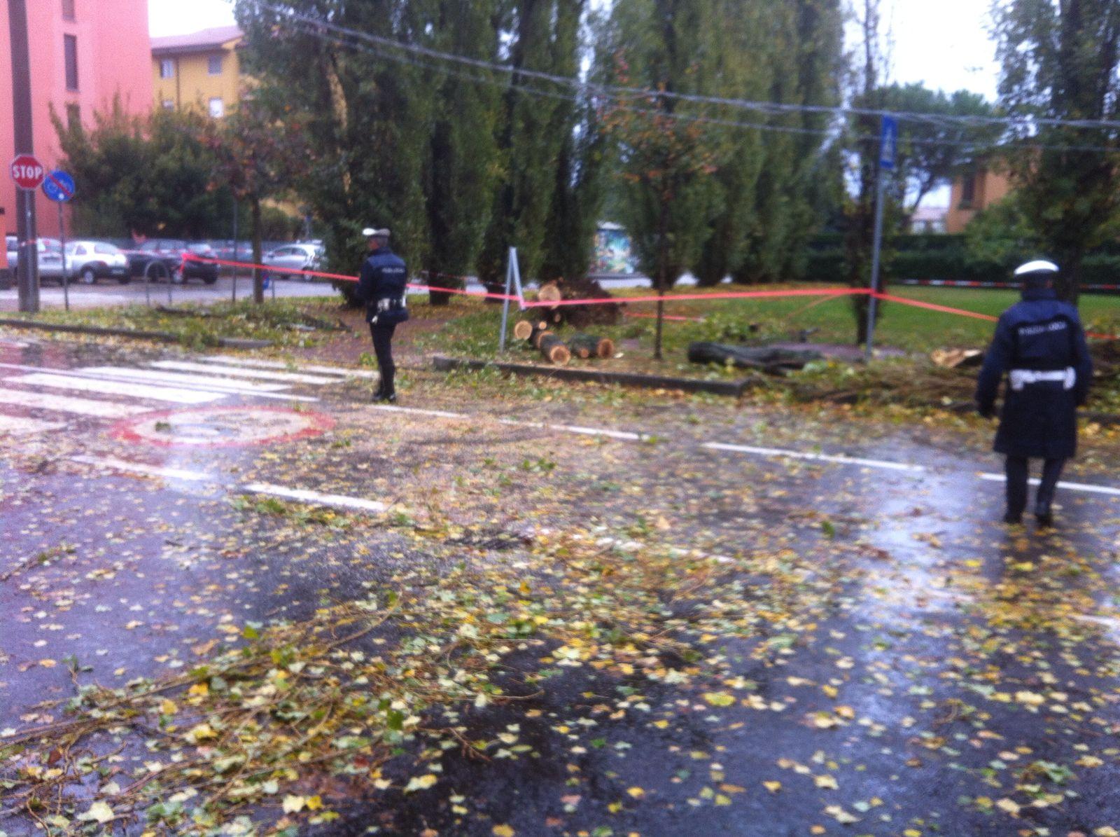 albero caduto saronno
