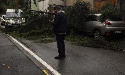 Cade albero su via Colombo a Prospiano: nessun ferito
