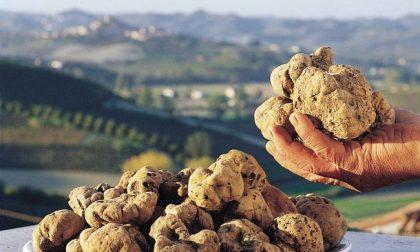 Prezzo tartufo in calo: è il momento di una gita in Piemonte