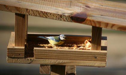 Parco Pineta: costruiamo insieme un nido per gli uccelli