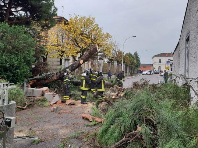 Parabiago, albero caduto in via 24 maggio