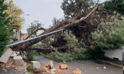 Troppe piogge: albero caduto sulla strada