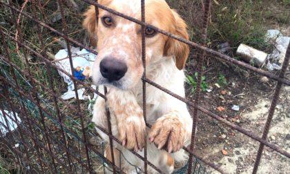 Cani abbandonati a Turate: blitz degli animalisti FOTO