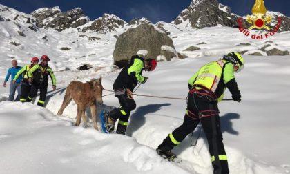 Cavalli sorpresi da una nevicata, soccorsi in elicottero VIDEO