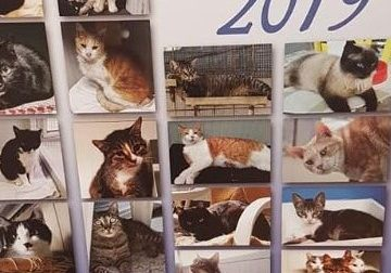 Dodici mesi con i randagi per aiutare il gattile