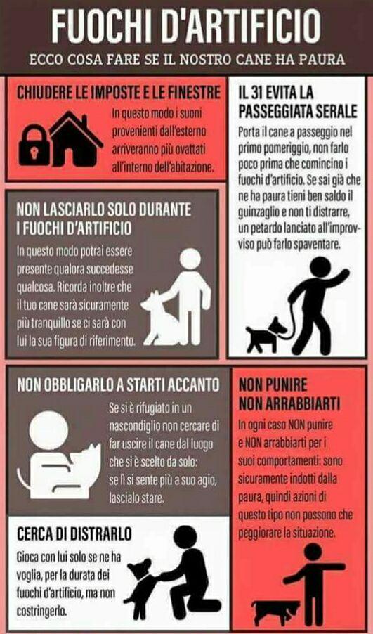 Capodanno da cani, ecco come tutelare gli animali