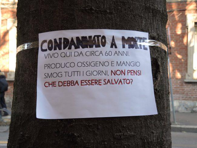 Taglio piante in via Roma a Saronno Legambiente vuole salvare il viale alberato