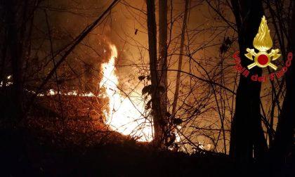 Incendio boschivo a Castiglione Olona FOTO