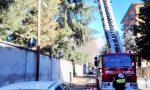 Ramo pericolante, arrivano i pompieri