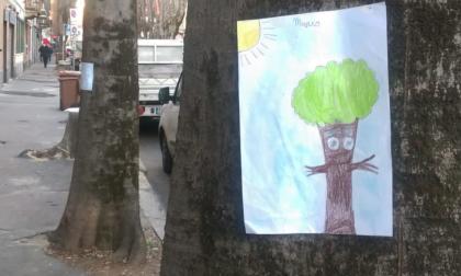 Alberi abbattuti in via Roma Ambiente Saronno Onlus chiede di ripensare il progetto
