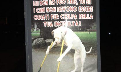 Volantini contro i padroni di cani incivili a Saronno e Turate FOTO