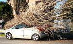 Alberi malati e non curati crollano sulle auto a Rho FOTO