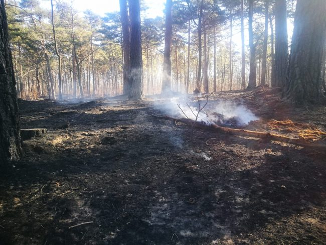 Incendio nei boschi Abbiate, fuoco domato ma non cala l&#8217&#x3B;attenzione