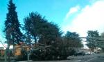 Vento forte: cade un albero a Cornaredo FOTO
