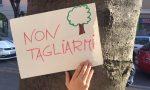 Salva via Roma: ultima passeggiata tra gli alberi FOTO e VIDEO