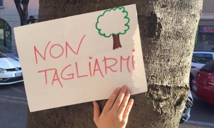 """""""La Lega si impegni a ripiantumare i 180 alberi di via Roma"""""""