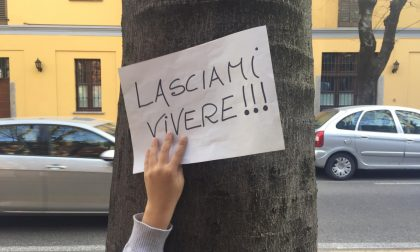 Salva Via Roma, nuova petizione a Saronno