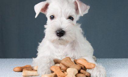 Snack per cani: i premi migliori e più salutari per i nostri amici a 4 zampe