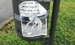 Cane avvelenato a Turate: il veterinario lo salva
