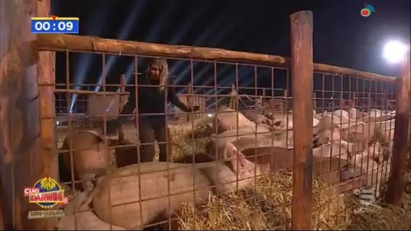 ciao darwin 8 dice addio agli animali dopo le denunce