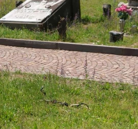 serpenti al cimitero