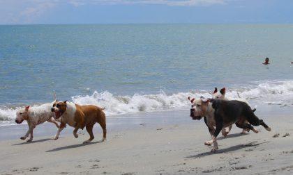 Animali in estate, i consigli per proteggere gli amici a quattro zampe
