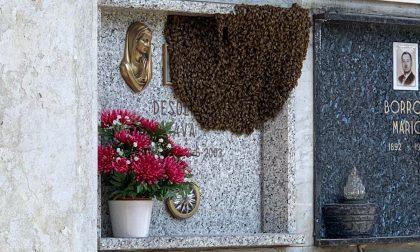 Il cimitero di Arese invaso dalle api