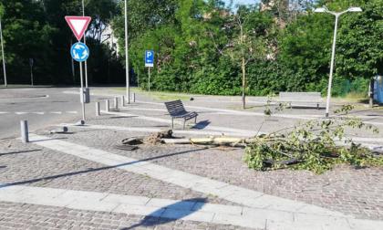 Ubriaco abbatte due paracarri e un albero in piazza a Seguro FOTO